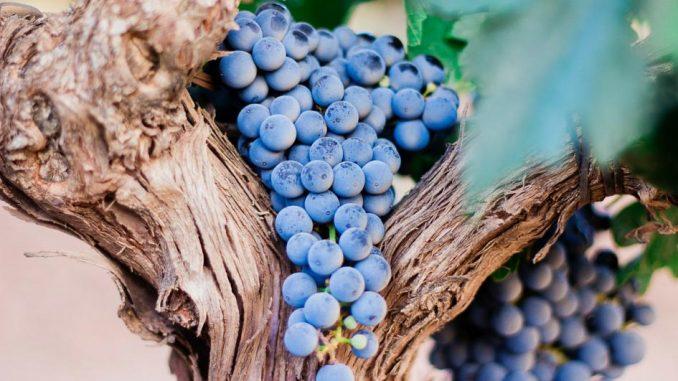 wine in Moldova places